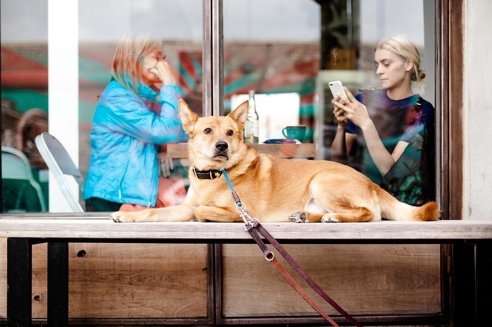 Restaurantes en Barcelona para ir con tu perro
